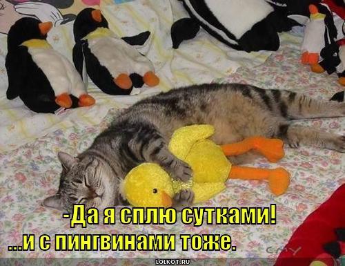 http://lolkot.ru/wp-content/uploads/2010/10/splyu-sutkami_1286777607.jpg