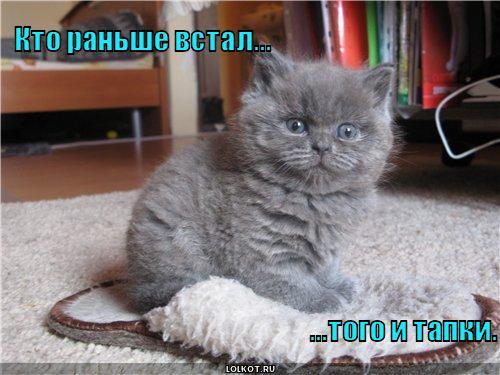http://lolkot.ru/wp-content/uploads/2010/10/tapki_1286084510.jpg