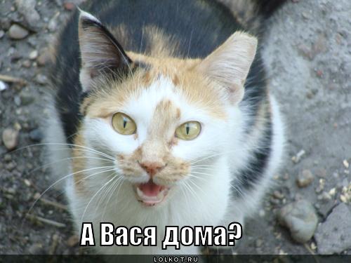 Прикольные коты недавних дней фото монастырь первым