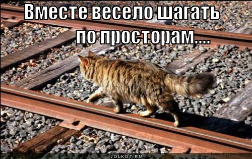 http://lolkot.ru/wp-content/uploads/2010/10/veselo-shagat_1288144701.jpg