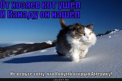 Кот ушёл картинки