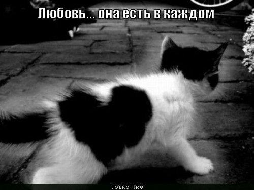 https://lolkot.ru/wp-content/uploads/2010/11/lyubov-yest-v-kazhdom_1289580924.jpg