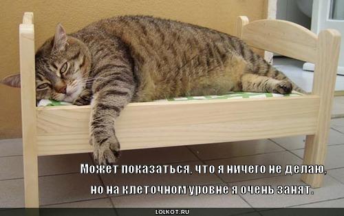 очень картинки котов и смешные собак  про