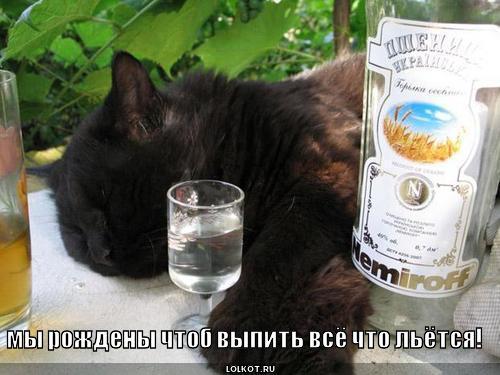 что выпить чтобы избавиться от паразитов