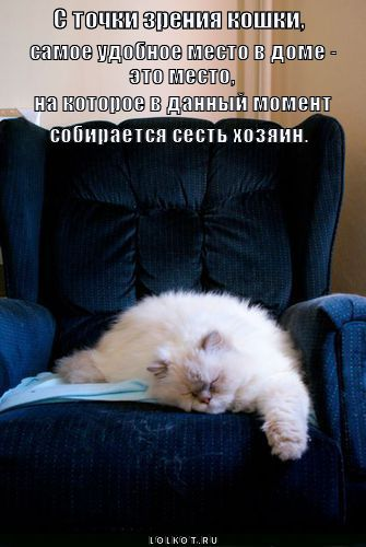 С точки зрения кошки самое удобное