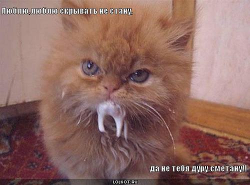 Люблю тебя как кот сметану