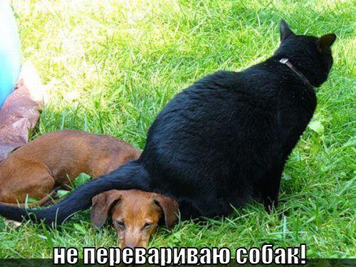 http://lolkot.ru/wp-content/uploads/2011/01/ne-perevarivayu-sobak_1295412079.jpg