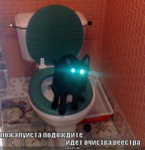 Смешные картинки кошек с надписями продолжают.