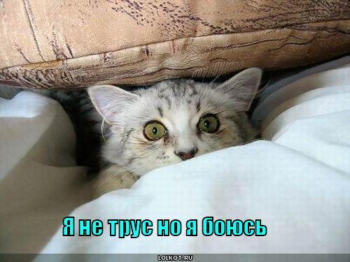 http://lolkot.ru/wp-content/uploads/2011/01/ya-ne-trus_1294891312.jpg