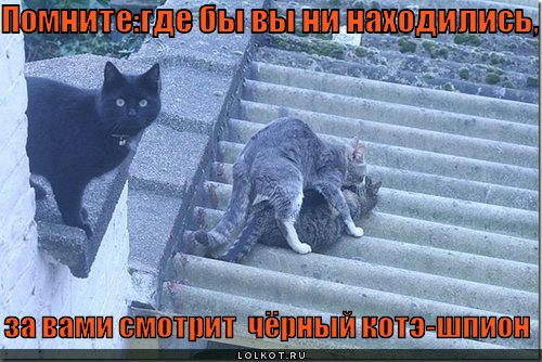 http://lolkot.ru/wp-content/uploads/2011/02/chyornyy-kote-shpion_1296678948.jpg