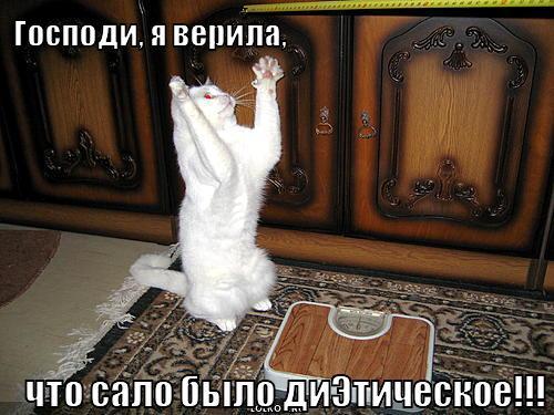 Фото расположено в каталоге: приложение cat foto.