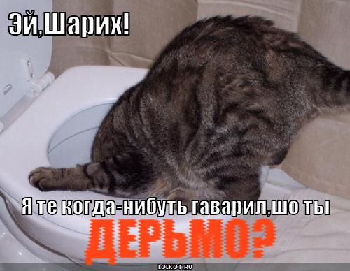 Смешные картинки про кошек с надписями с матом, днем рождения начальнику