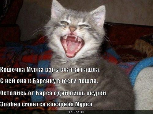 http://lolkot.ru/wp-content/uploads/2011/03/koshechka-murka_1300937486.jpg