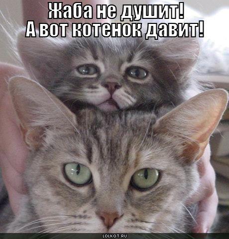 Смешные картинки котята с надписями до слёз про