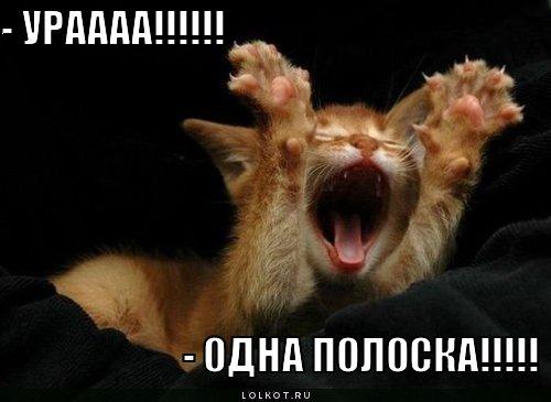 http://lolkot.ru/wp-content/uploads/2011/03/odna-poloska_1301457051.jpg
