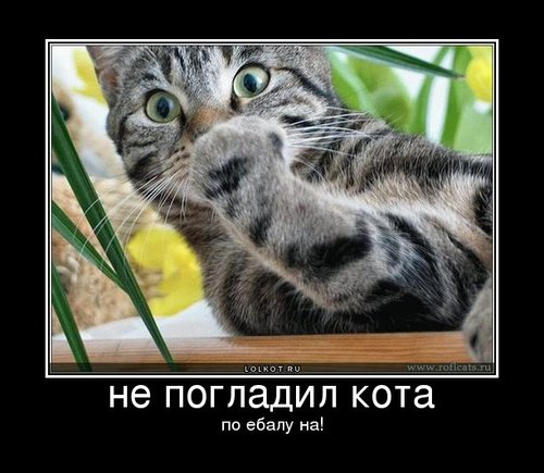 по ебалу на! | Лолкот.Ру: https://lolkot.ru/2011/03/30/po-yebalu-na/