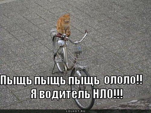 http://lolkot.ru/wp-content/uploads/2011/03/voditel-nlo_1300711006.jpg