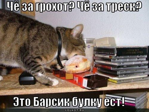 http://lolkot.ru/wp-content/uploads/2011/04/barsik-bulku-yest_1301677782.jpg