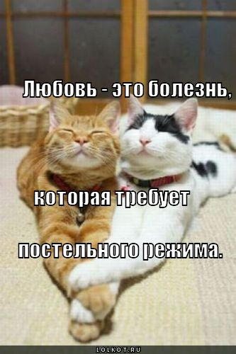 lyubov-eto-bolezn_1302787829.jpg