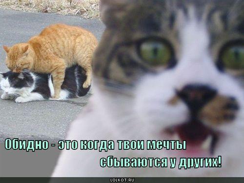 http://lolkot.ru/wp-content/uploads/2011/04/mechty_1303023936.jpg