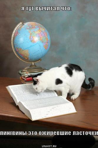 игры кота стих