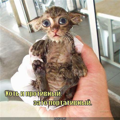 http://lolkot.ru/wp-content/uploads/2011/04/portativnyy_1304020162.jpg