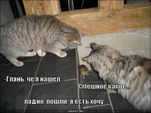 котики смешное