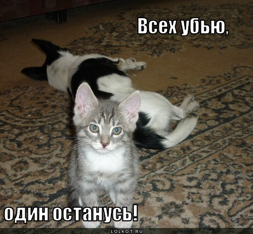 Похожие темы: картинки смешные с кошками с надписями и смешные картинки кошки с надписями.