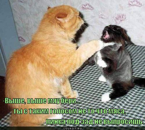 http://lolkot.ru/wp-content/uploads/2011/04/vyshe-beri_1303023080.jpg