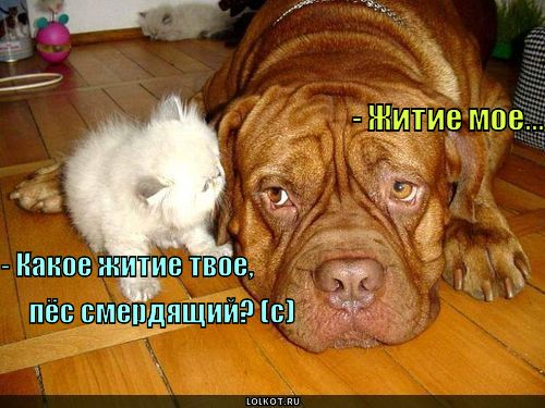 http://lolkot.ru/wp-content/uploads/2011/04/zhitiye-moye_1301891613.jpg
