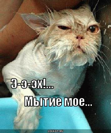 http://lolkot.ru/wp-content/uploads/2011/05/mytiye-moye_1304697895.jpg