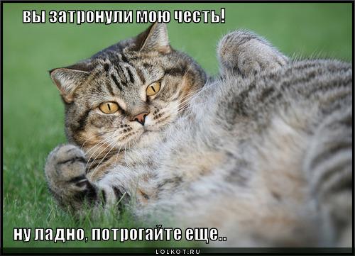 http://lolkot.ru/wp-content/uploads/2011/05/zatronuli-chest_1304480277.jpg