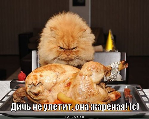 http://lolkot.ru/wp-content/uploads/2011/06/dich-ne-uletit_1306995607.jpg