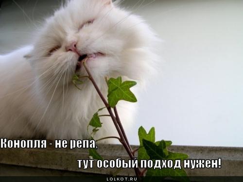 конопля приколы: