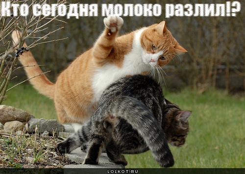 https://lolkot.ru/wp-content/uploads/2011/06/kto-moloko-razlil-_1307289342.jpg