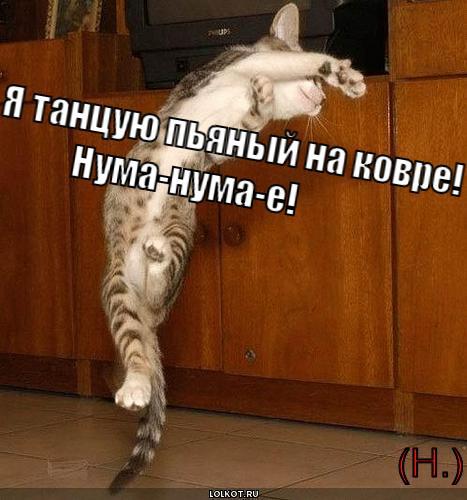 http://lolkot.ru/wp-content/uploads/2011/06/pyanyy-na-kovre._1307374108.jpg
