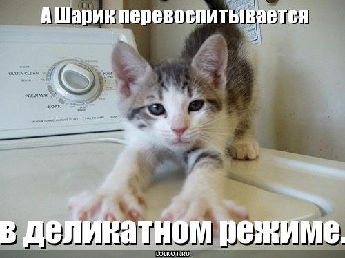 lolkot.ru/wp-content/uploads/2011/06/sharik-perevospityvayetsya_1308560507.jpg