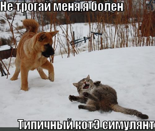 http://lolkot.ru/wp-content/uploads/2011/08/kote-simulyant_1313836314.jpg