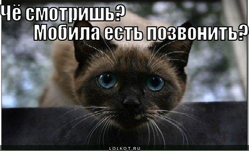 mobila-yest_1312553054.jpg