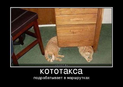 следующий лолкот. ctrl. кототакса-подрабатывает в маршрутках. в начало.  Стамп. предыдущий лолкот. постер.