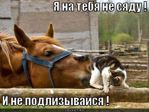 не подлизывайся !