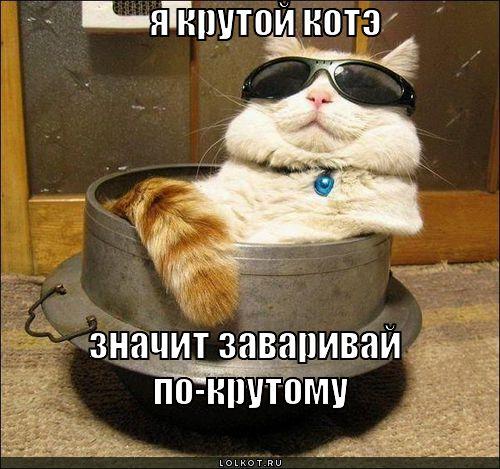Фотки крутой кот - f5e39