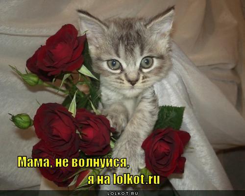 http://lolkot.ru/wp-content/uploads/2011/11/ne-volnuysya_1321379383.jpg
