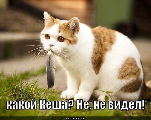 http://lolkot.ru/wp-content/uploads/2011/12/kakoy-kesha_1324461090.jpg