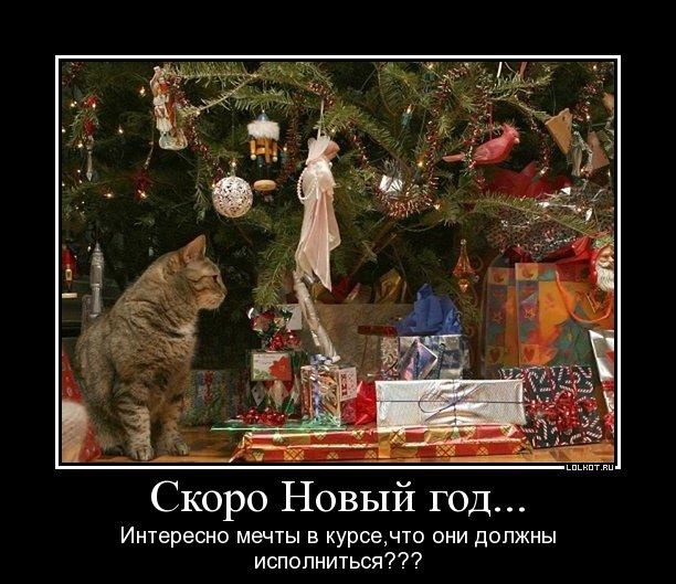 http://lolkot.ru/wp-content/uploads/2011/12/mechty-v-kurse_1324359700.jpg