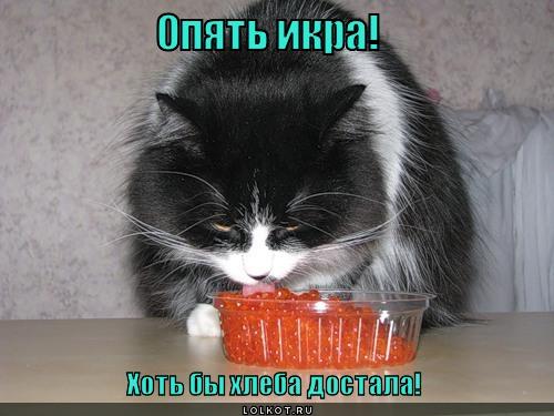 Кот и икра картинки