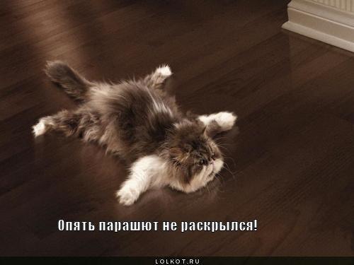 http://lolkot.ru/wp-content/uploads/2011/12/parashyut-ne-raskrylsya_1323839779.jpg