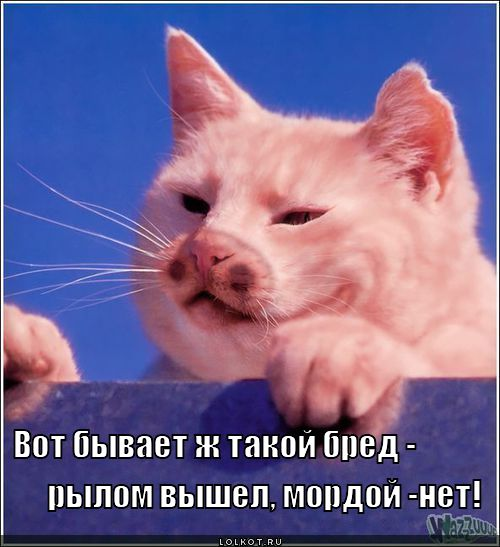http://lolkot.ru/wp-content/uploads/2011/12/rylom-vyshel-mordoy-net_1323410878.jpg