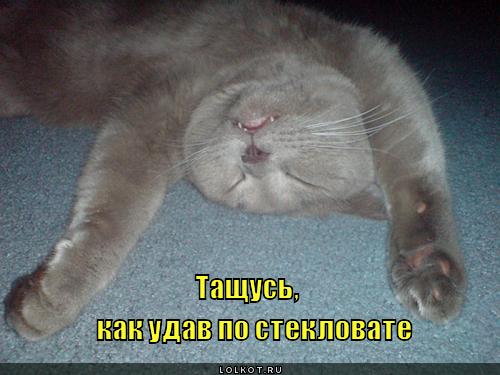 kak-udav-po-steklovate_1326611410.jpg