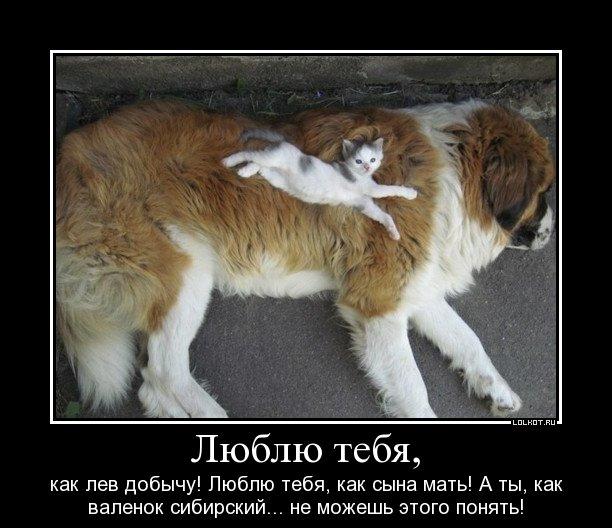 lyublyu-tebya_1326286373.jpg